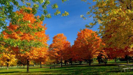 trees, park, autumn