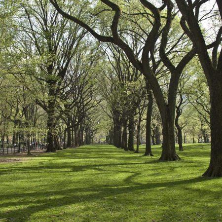 trees, park, grass