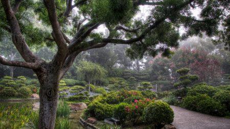 trees, path, haze