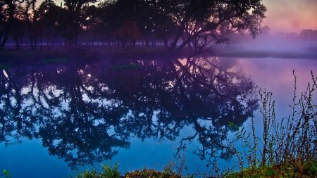 trees, reflection, pond