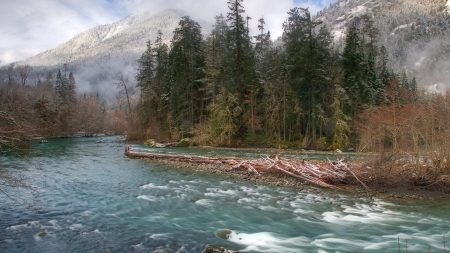 trees, river, fir-trees