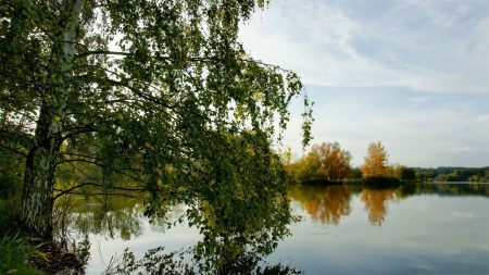 trees, river, grass