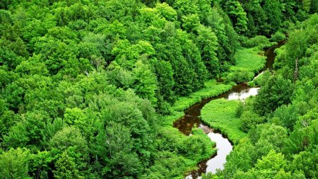 trees, river, greens