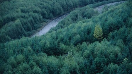 trees, river, height