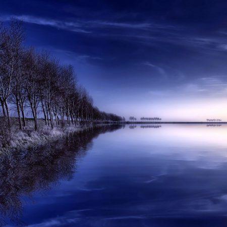 trees, row, lake