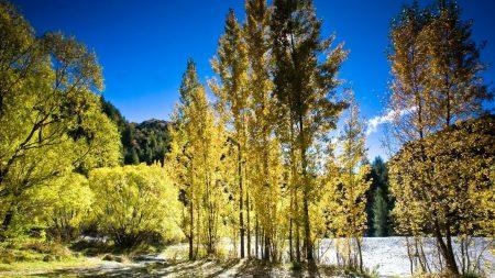 trees, shades, light