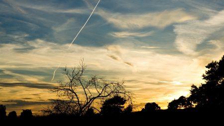 trees, silhouettes, twilight
