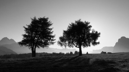 trees, slope, black-and-white