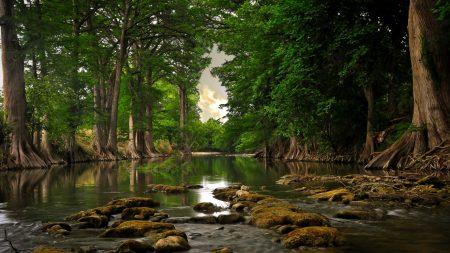trees, stones, river