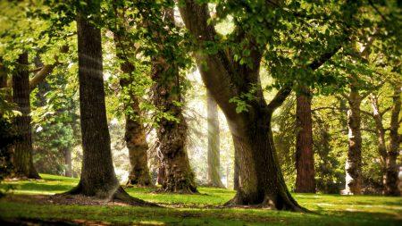 trees, sun, light