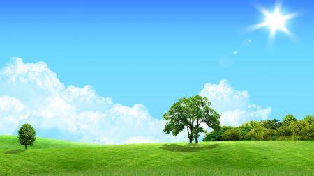 trees, sun, meadow