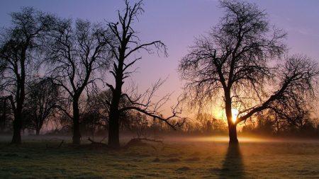 trees, sun rays, light