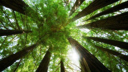 trees, trunks, kroner