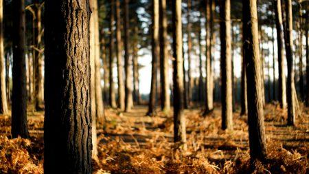 trees, trunks, wood