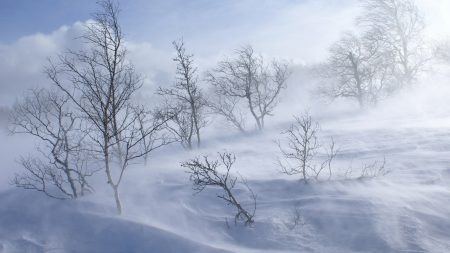trees, winter, blizzard