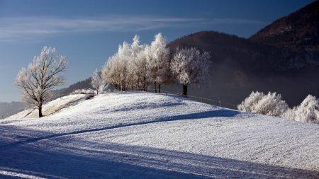 trees, winter, hoarfrost