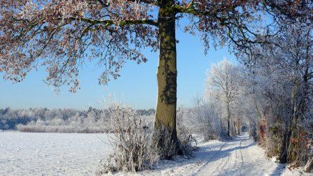 trees, winter, road