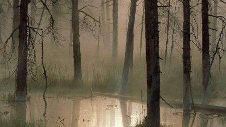 trees, wood, bog