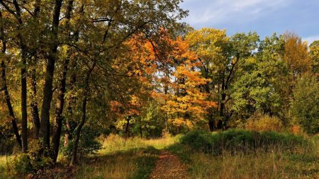 trees, wood, track