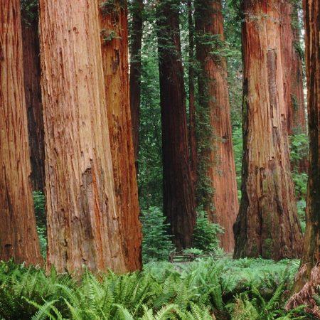 trunks, trees, wood