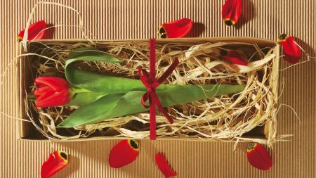 tulip, flower, boxes