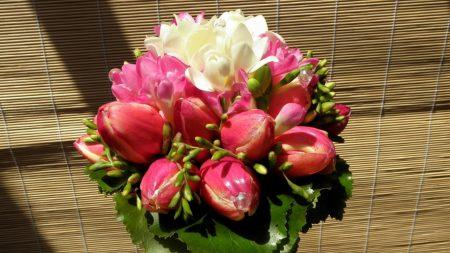 tulips, buds, freesia