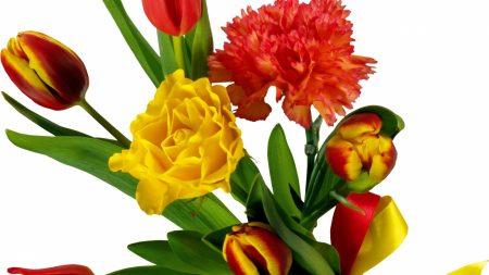 tulips, carnations, ribbon