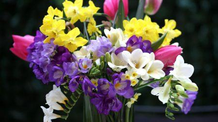 tulips, daffodils, freesia