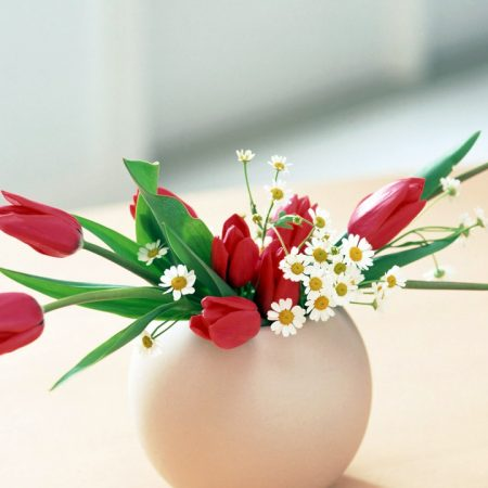 tulips, daisies, flowers