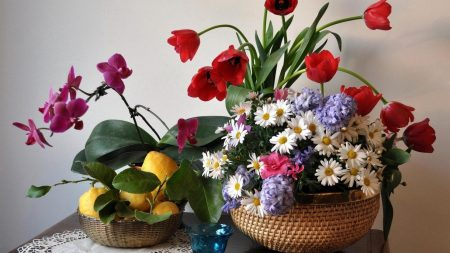 tulips, daisies, orchids