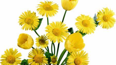 tulips, daisies, yellow