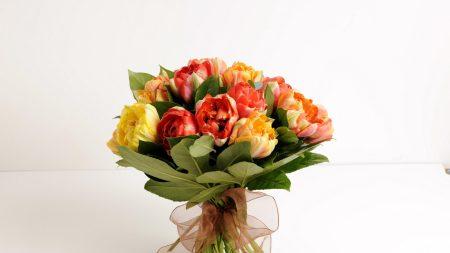 tulips, flower, leaf