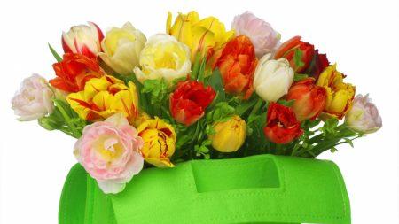 tulips, flowers, bag