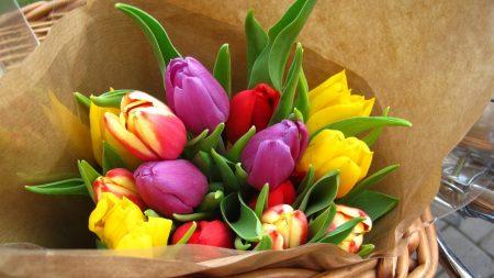tulips, flowers, bright