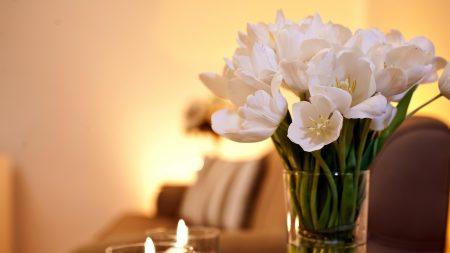 tulips, flowers, bunch
