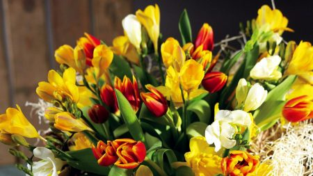 tulips, flowers, daffodils