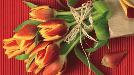 tulips, flowers, flower