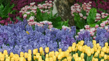 tulips, flowers, hyacinths