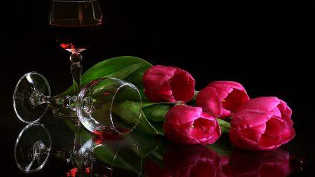 tulips, flowers, lie