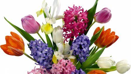 tulips, irises, hyacinths