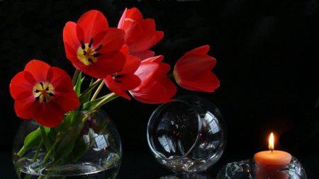 tulips, loose, flowers