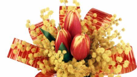 tulips, mimosa, flower