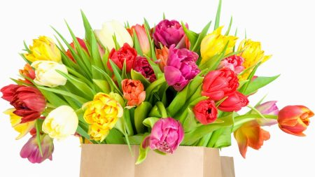 tulips, package, bouquet
