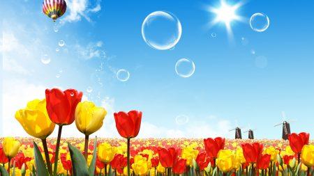 tulips, sun, sky