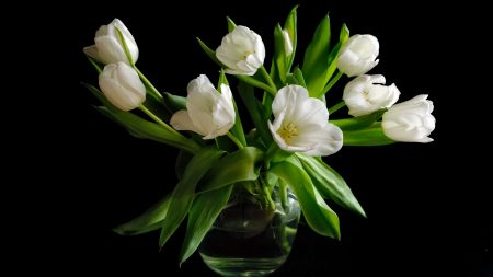 tulips, white, loose
