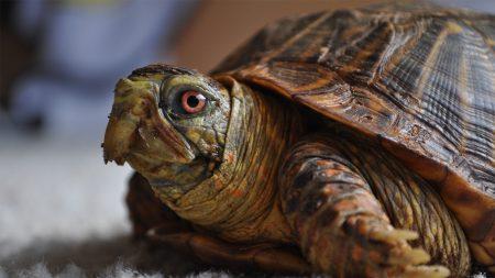 turtle, head, shell