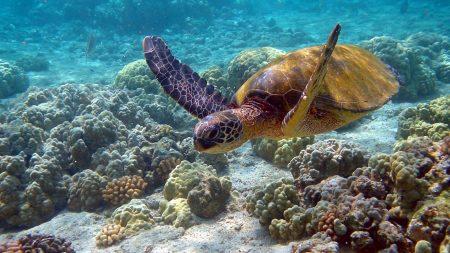 turtle, underwater, swim
