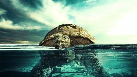 turtle, water, swim