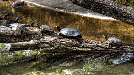 turtles, nature, crawling