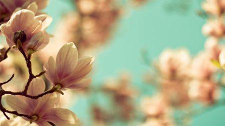 twig, flower, plant